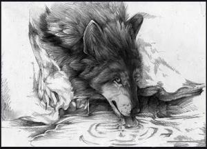 lobo1